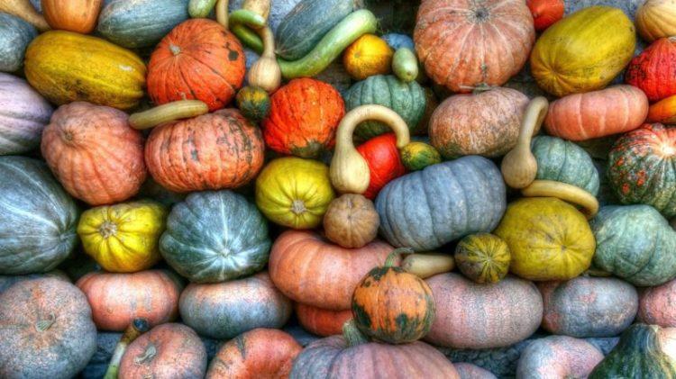 decorative Halloween gourds